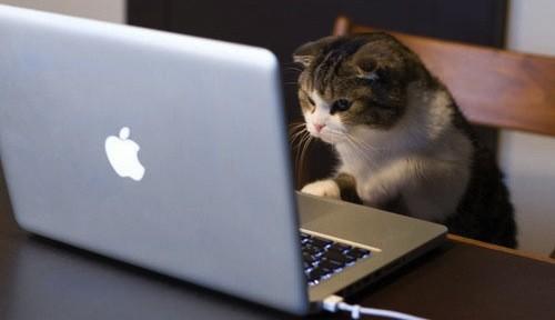 cat tools Kaliteli Tercüme Yapmanın Yolları