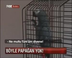 papagan efe ne mutlu turkum diyene 300x240 Ne Mutlu Türküm Diyene! Papağan Efe